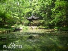 西湖龙井五大茶区图片