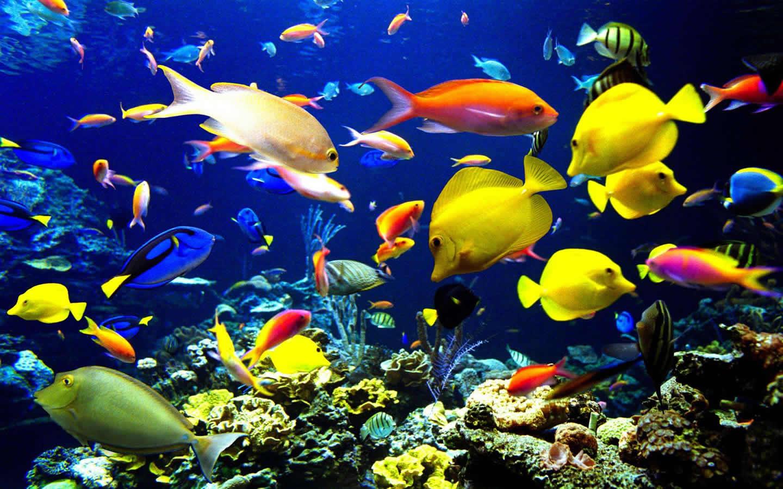海洋生物是指海洋里有生命的物种,包括海洋动物,海洋植物,微生物及图片