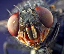 苍蝇的口器
