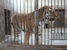 狮虎山展览动物