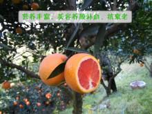 江西血橙树形特征