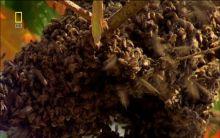 这些蜜蜂在野外大量繁殖起来,攻击人畜超凡蜘蛛侠dlc图片