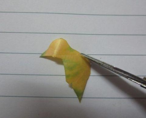 教你如何用叶子制作一只公鸡标本图片
