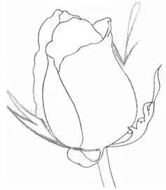 技术贴:如何用铅笔画一朵玫瑰花?图片