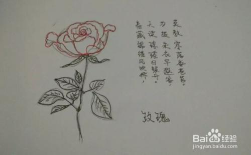 简笔画报花名 玫瑰花画法