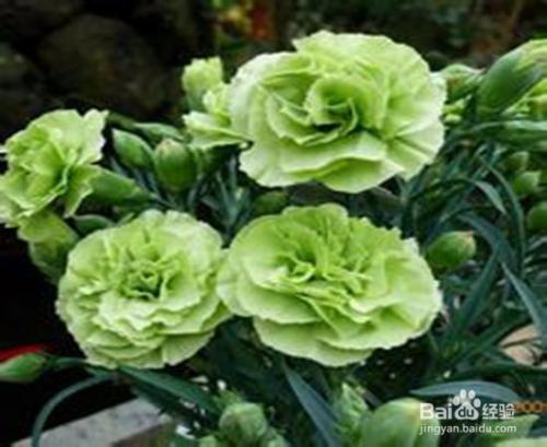 种子 盆栽 花草 植物