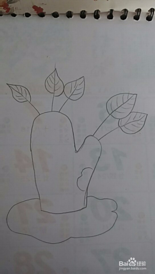 多妈简笔画画植物大树
