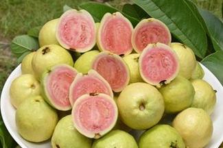 中田杏梨bt种子