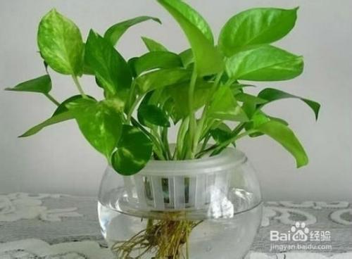 家里放什么植物比较好比较健康