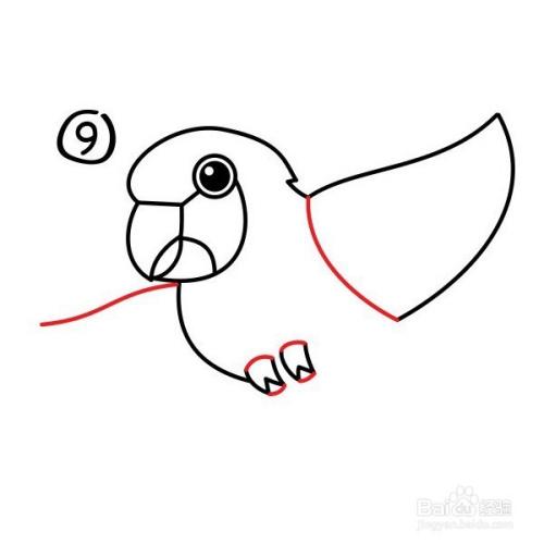 【动物——鹦鹉篇】 怎么画鹦鹉简笔画步骤图图片