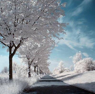 冬季养生食谱