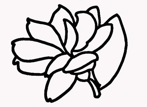 松树叶的画法大全 简笔画柳树的画法 中国画荷花的画法图片