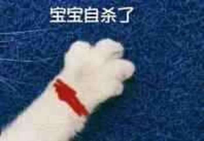 猫爪牵手手短表情包图片图片