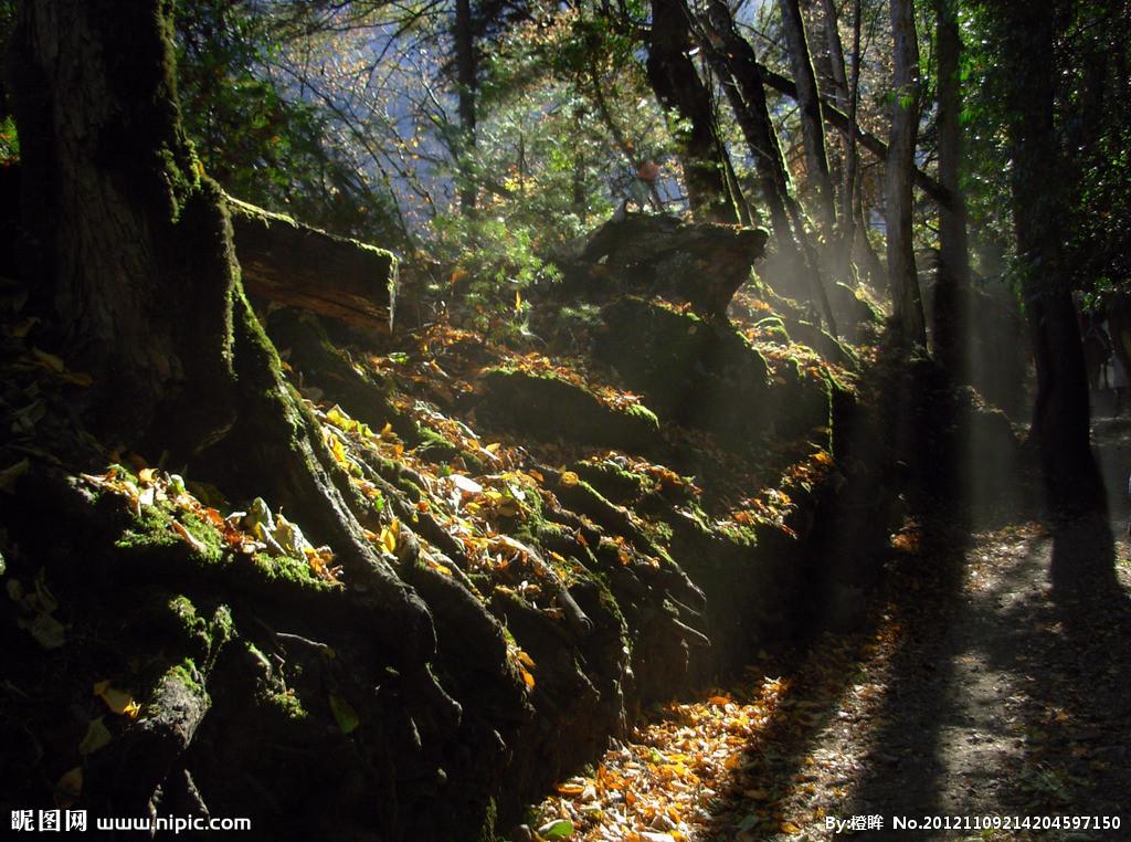 原始森林摄影高清图片_原始森林摄影高清图片_原始森林摄影高清图片图片