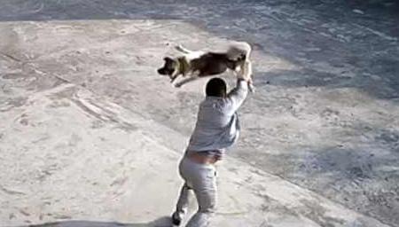 残忍!监拍偷狗贼偷狗