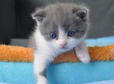 我国首只克隆猫将满月