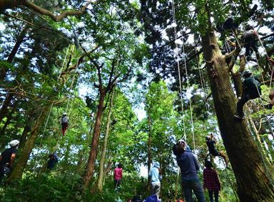 四川大学开设攀树课