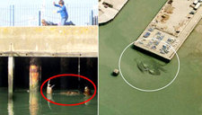 英国再现巨蟹照片 目测或有15米长