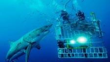 实拍游客水下遭遇大白鲨袭击 凶残无比