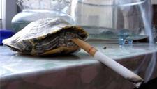 抽烟也能玩出花样!小伙展示花式抽烟