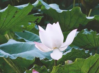 自然类纪录片《湿地的力量》