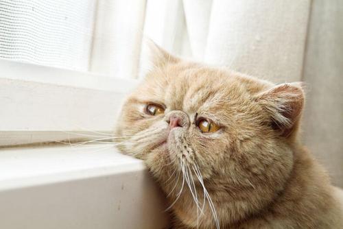 世界那么大,猫咪要不要去看一看?