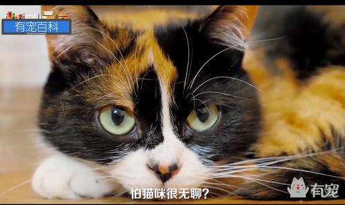 脑洞大开的养猫大法,猫奴福利不看后悔!