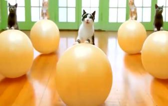 萌萌喵老师教你新式瑜伽,分分钟练出好身材