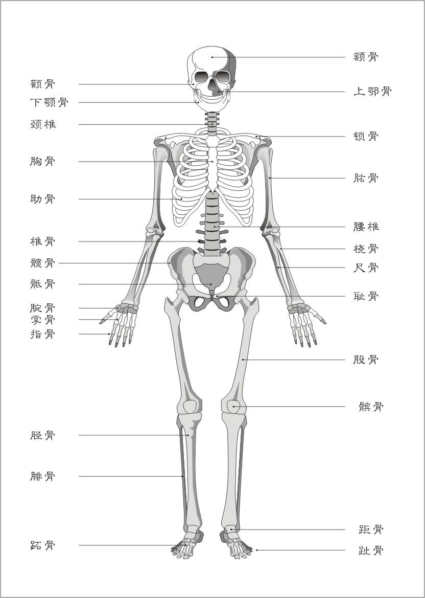 老年女性人体囹�a_孕38周,耻骨和腰会痛,是不是临产的征兆