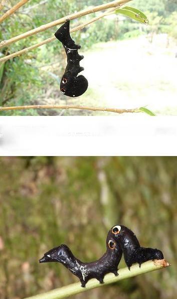 蛾由什么变成的