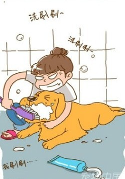 金毛吃什么清洁牙齿