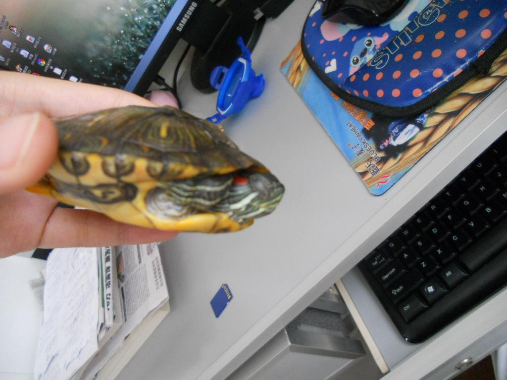 乌龟冬眠是什么样子 刺猬冬眠是什么样子 乌龟冬眠样子