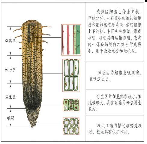 植物的根按特点分类