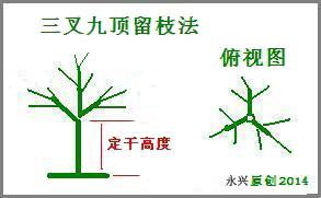 桂花树修剪时间