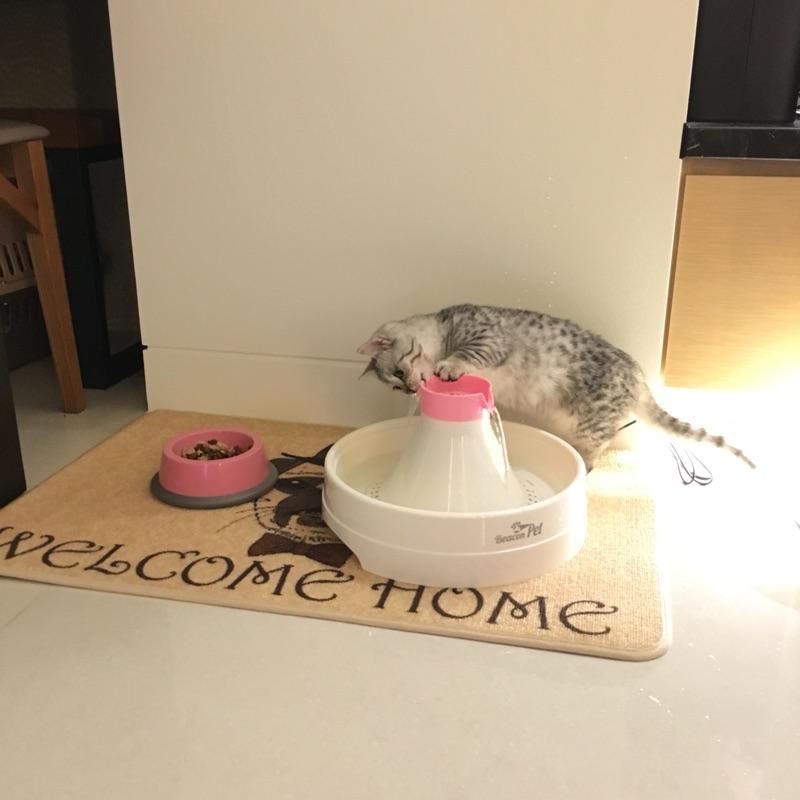 猫咪的膀胱炎原因