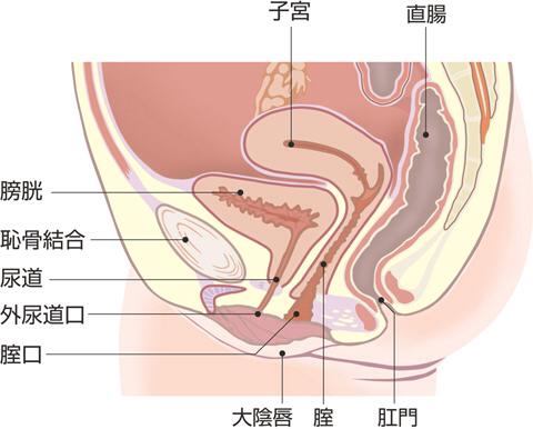 女生大膀胱图片