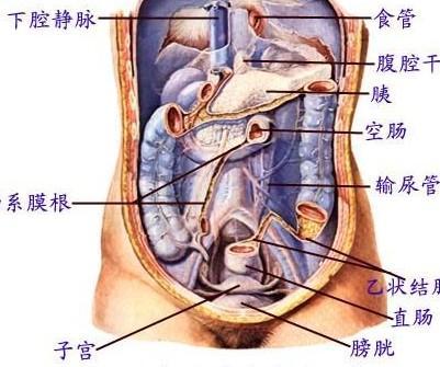 中国女人的子宫照片