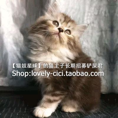 公猫发腮吃什么