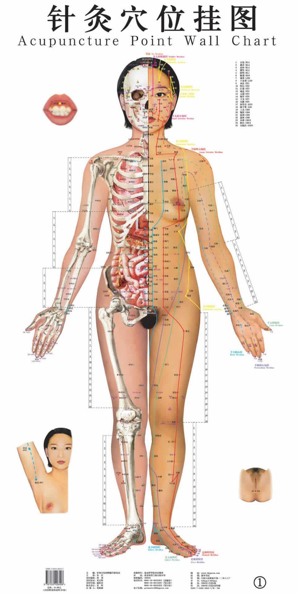 谁有针灸的穴位解剖图