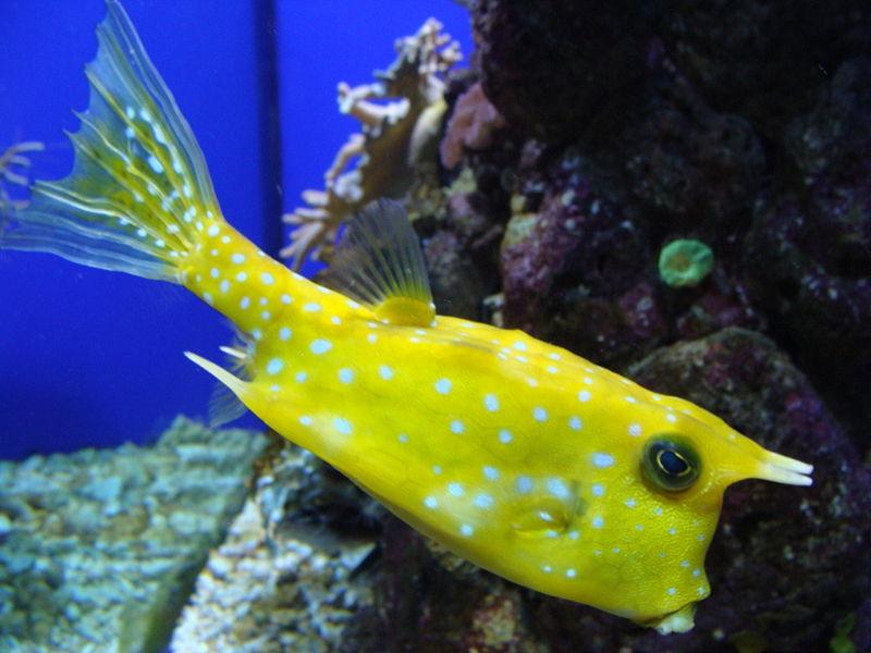 海里游泳發現的怪魚,想知道這魚的名字圖片