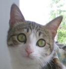 猫咪开美瞳什么意思