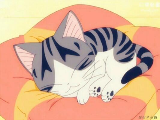 谁有甜甜私房猫的超级萌图?图片