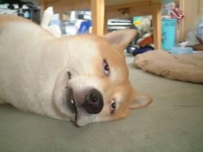 小狗从小到大的照片