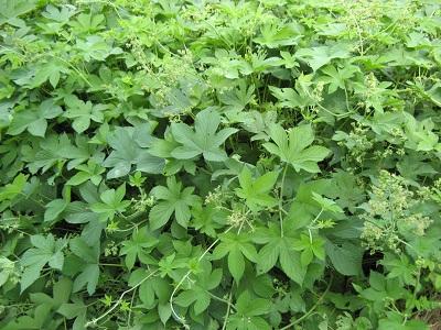 带刺的草本植物有哪些