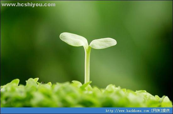 就是种子刚发芽的状态吧-种子发芽图片 发芽教程 发芽摄影图 树木树叶图片