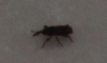 梦见床上有黑色的虫子
