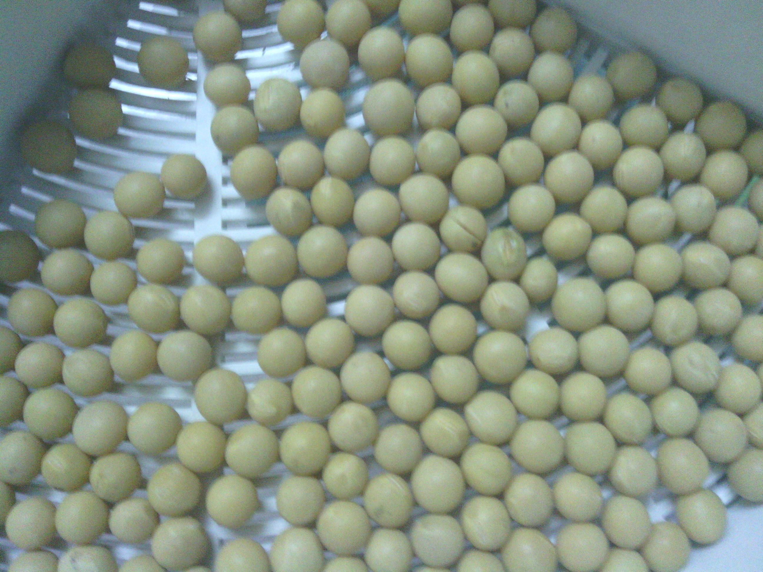 黄豆芽成长过程