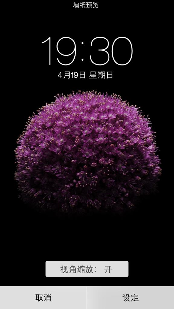 谁有苹果6手机的屏保图片紫色的花那个图片