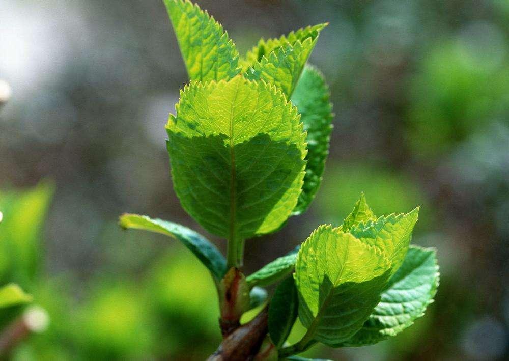 春天树木为什么会发芽?