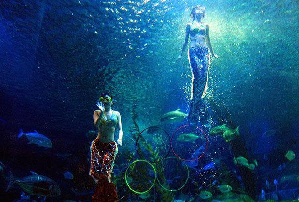 长沙海底世界表演时间